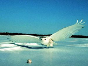 Птица хищник