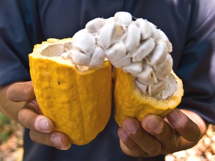Что такое какао-бобы?