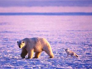 Два друга в Арктике