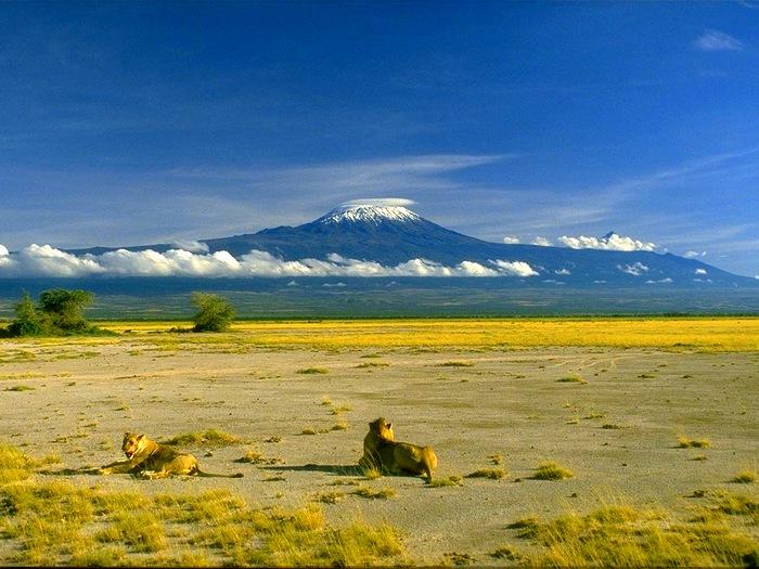 Стражи Килиманджаро