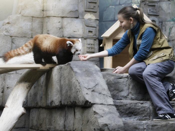 Лакомство для панды