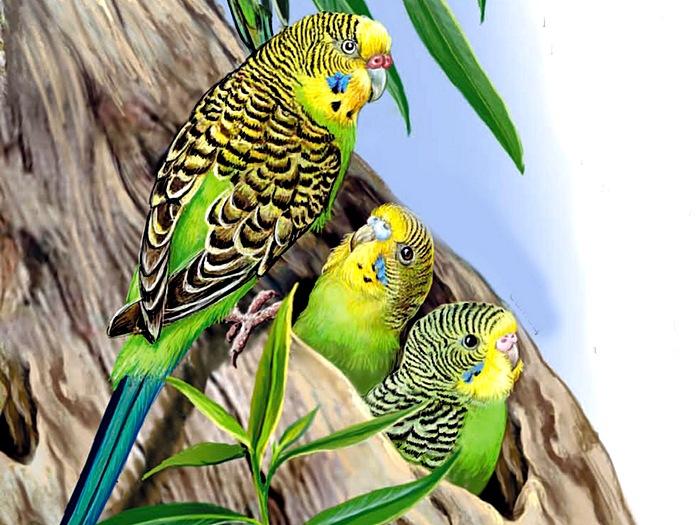 Семейство попугаев