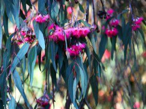 Эвкалиптовый цвет