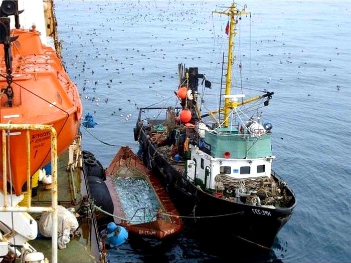 Рыбный промысел в Охотском море