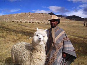 Альпака в Чили