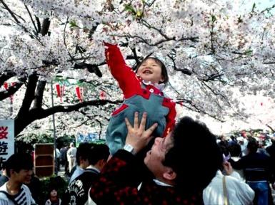 Праздник Ханами. Японская традиция Ханами.