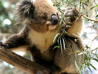Животные Австралии. Название и описание животных Австралии.