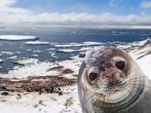 Материк Антарктида. Интересные факты об Антарктиде