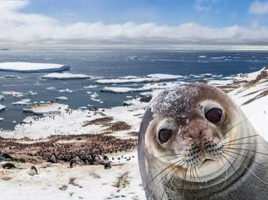 Материк Антарктида. Интересные факты об Антарктиде.
