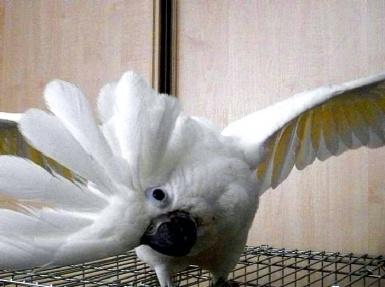 Говорящий попугай: Кеша, видео