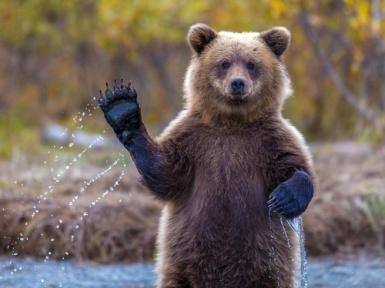 Медведь - описание. Где живут медведи? Все виды.