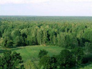 Беловежская пуща — Беларусь
