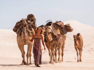 Австралийский верблюд