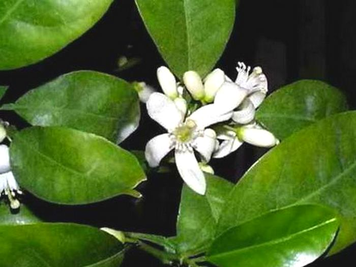 Цветы свити