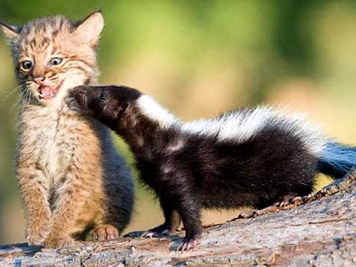 Дружелюбное животное