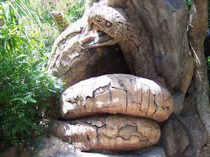 Баобаб змея