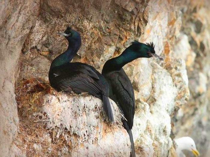 Гнезда птиц на острове Врангеля