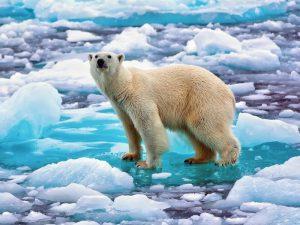 На тающем льду