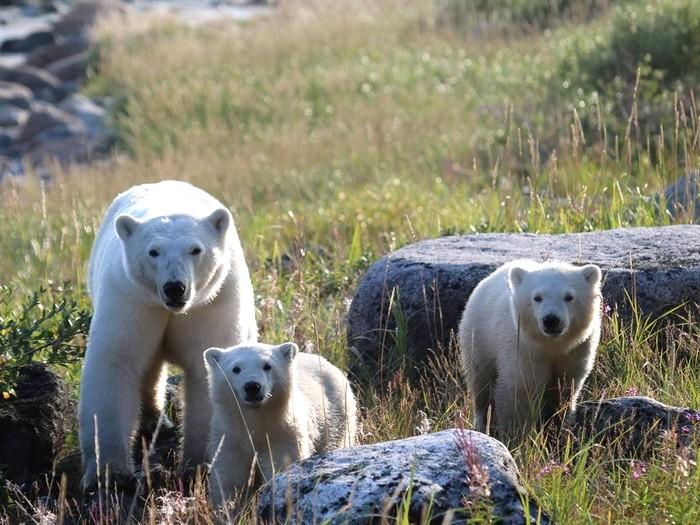 С медвежатами