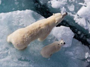 На льдинах