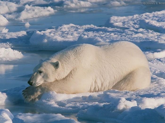 Отдых на льдине