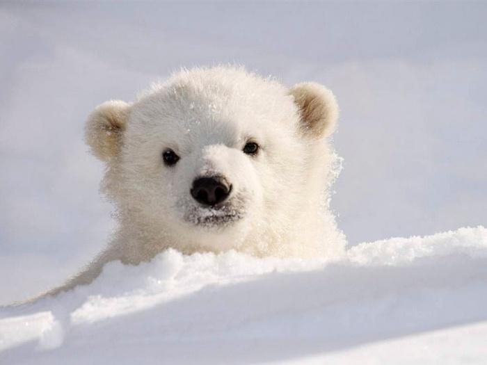 Как снег