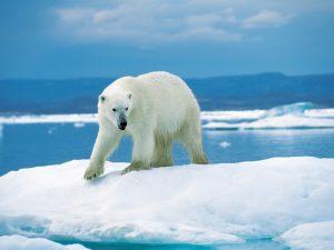 В поход по льдинам