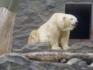 Зоопарк для белого медведя