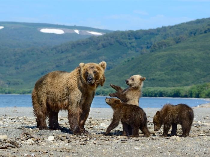 Большая семейка