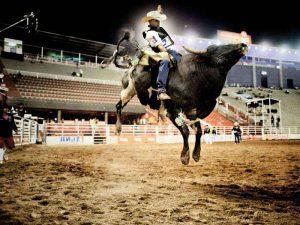 Bullriding или родео на быках