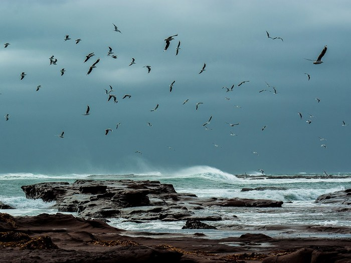 Буревестники над побережьем