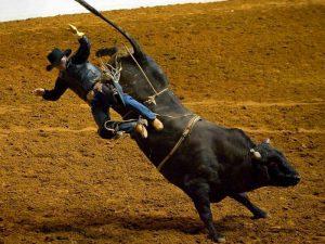Победил бык