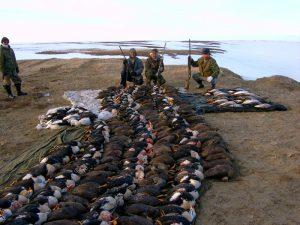Охота на птицу на море Лаптевых