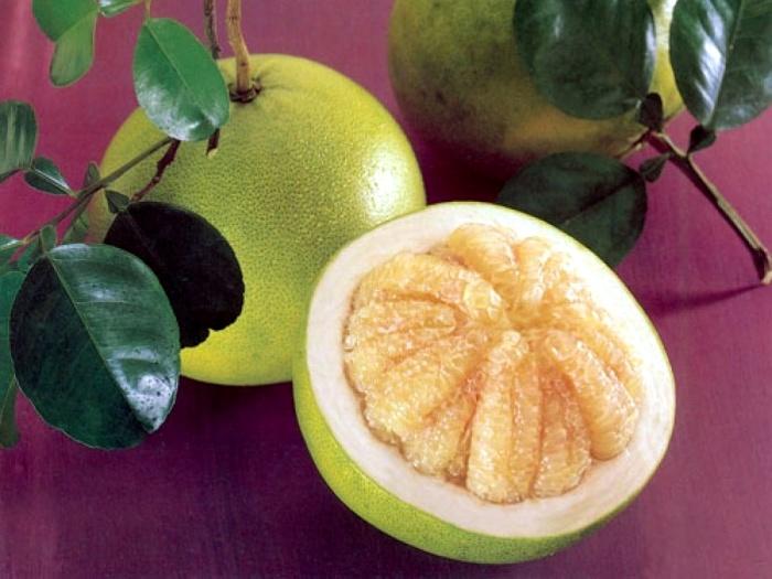 Помело (памела) фрукт: как растет, польза и вред, противопоказания, калорийность