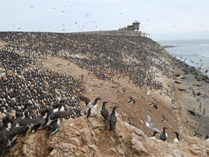 Птичий базар на острове в Море Лаптевых
