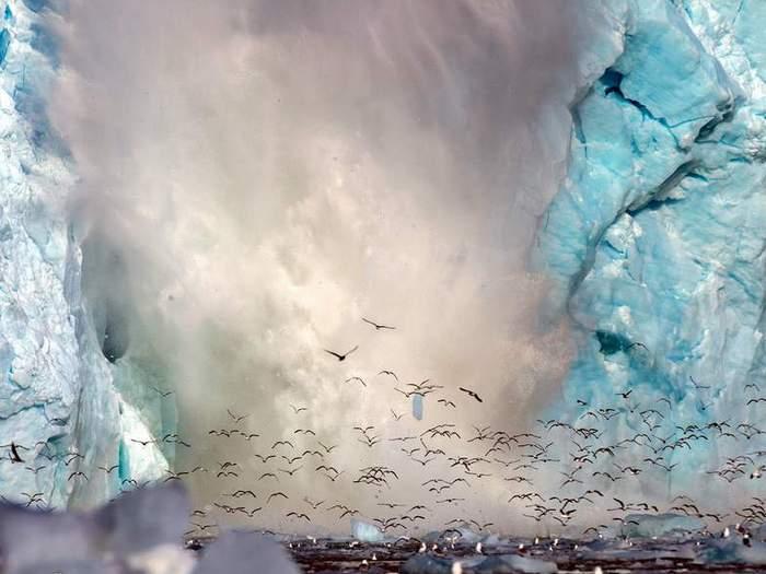 Чайки на леднике