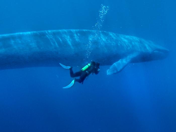 Cиний кит и водолаз.