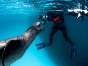 Морской леопард фото