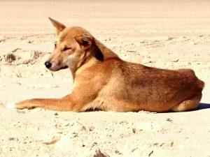 Древнейшая порода собак