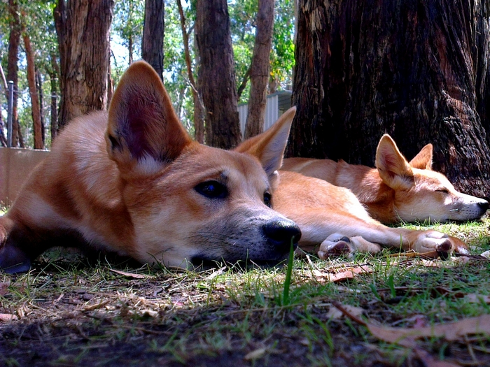 Я под деревом лежу