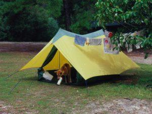 Динго в лагере