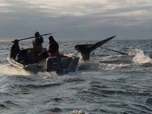 Добыча кита