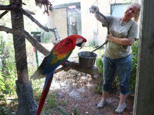 Душ для попугая