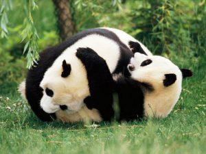 Игры панд