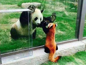 Встреча родственников