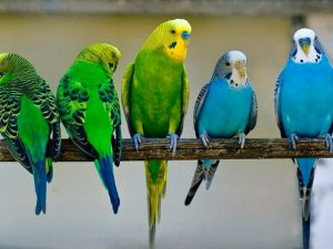 Разноцветная попугайская семейка