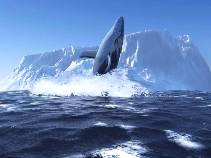 Блювал в Антарктиде