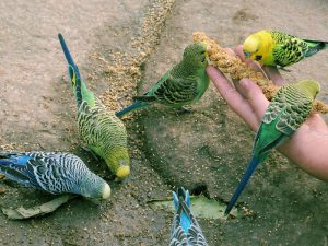 Еда для попугайчиков