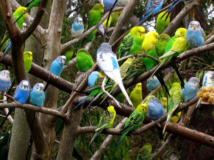 Попугайчики на ветках