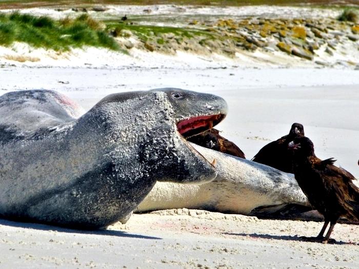 Хищный гигант на берегу